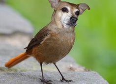 Birdiedog