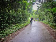 Cuc Phuong National Park Vietnam Buffalo Run http://www.divergenttravelers.com/vietnams-great-adventure-buffalo-run/ #vietnam #divergenttravelers #buffalorun #bestblog #postoftheday #travelpost #Adventure #mustsee #mustdo #photooftheday #cucphuong