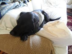 """Chapter 29 - The Book of Barkley - """"Dogs and Cats Living Together""""."""