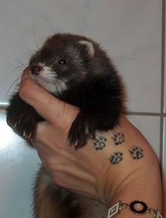 Man I want tattoos of all of my past, and present ferrets.. and one with pawprints..