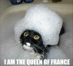 I am way more interested in how they got a cat to sit still in a bubble bath.