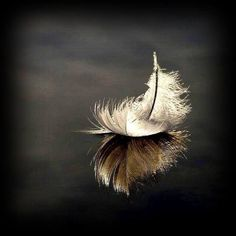 The Stage – Stephanie Bennett-Henry Feather Photography, Macro Photography, Creative Photography, Feather Art, Feather Tattoos, Feather Wallpaper, Leaf Art, Still Life Photography, Belle Photo