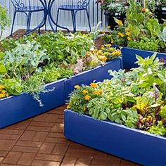 Gardening On Pinterest Raised Beds Milk Crates And Farms