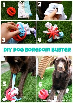 Make your own interactive dog toy! This easy DIY boredom buster project will keep you and your pooch entertained.Make your own interactive dog toy! This easy DIY boredom buster project will keep you and your pooch entertained. Homemade Dog Toys, Diy Dog Toys, Pet Toys, Diy Pour Chien, Dog Boredom, Boredom Busters, Dog Enrichment, Interactive Dog Toys, Dog Games