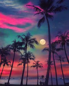 Post with 1975 votes and 103375 views. Tagged with nature, awesome, moon, singapore, palm trees; Beautiful Nature Wallpaper, Beautiful Sky, Beautiful Landscapes, Beautiful Hotels, Amazing Wallpaper, Beautiful Scenery, Beautiful Beaches, Sunset Wallpaper, Wallpaper Backgrounds