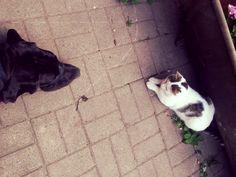 Püppi wird kritisch vom Haus- und Hofkater beäugt und wenig später katzentypisch beschmust. #catsanddogs  #dogge #deutschedogge #leipzig #thisisleipzig #clarapark #iloveleipzig #hypezig #weloveleipzig #meinleipziglobichmir #leipzig2016 #ig_leipzig