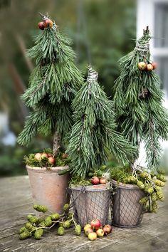material-natural-decoracion-invierno-macetas-abetos.jpg (760×1140)