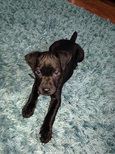 My pup jack