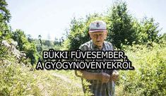BÜKKI FÜVESEMBER, A GYÓGYNÖVÉNYEKRŐL Medicinal Herbs, Natural Cures, The Cure, Essential Oils, Medicine, Health, Nature, Salud, Mother Nature