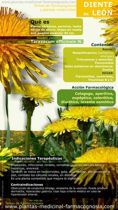 Infografía. Resumen de las características generales del Diente de León. Propiedades, beneficios y usos medicinales más comunes del Diente de León.