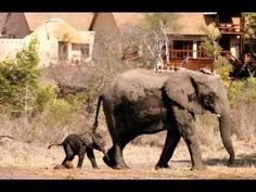We are one of the UK's leading South Africa Holidays specialists. All the holidays to South Africa and South Africa tours we feature are fully ATOL protected. South Africa Holidays, South Africa Tours, South Africa Safari, Sand Game, Game Lodge, Kruger National Park, Game Reserve, African Safari, Kenya