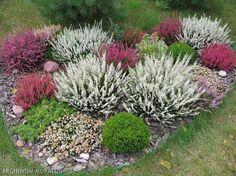 Obok wrzosów można sadzić rośliny, które podobnie jak one lubią kwaśną glebę i słoneczne miejsce, a kwitną wiosną lub latem