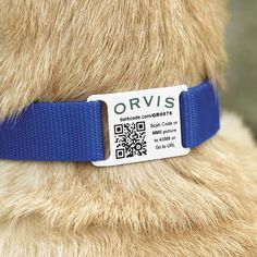 "An easy, inexpensive ""smart"" dog collar that contains everything anyone needs to know to care for and safely return your pet to you."