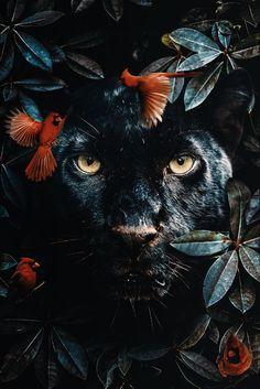 poster van een zwarte panter in de jungle omgeven door vogels en bladeren poster of a black panther in the jungle surrounded by birds and leaves Jungle Animals, Animals And Pets, Baby Animals, Cute Animals, Most Beautiful Animals, Beautiful Creatures, Animal Posters, Animal Wallpaper, Hd Wallpaper