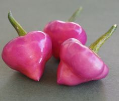 Cherio-Roxa Pepper Seeds (Capsicum chinense) Nice sweet flavor and low heat. A very rare variety from Brazil