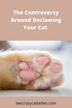 This week we published a Trivia Tuesday post on declawing your cat and the response was huge. On Facebook alone it reached over 10K within one hour. This is a controversial topic in the feline world, so let's talk about why. Crazy Cat Lady, Crazy Cats, First Time Cat Owner, Scared Cat, Controversial Topics, Cat Care Tips, Healthy Pets, Cat Behavior, Cat Facts
