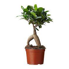 Plantes, cache-pot, pot de fleur - IKEA