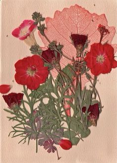 Pink Pressed flowers / Collections of Objects / Collections of Things / Displaying / Vintage / Ideas / Nature / Antique Dried And Pressed Flowers, Pressed Flower Art, Dried Flowers, Flowers Bunch, Art Floral, Ikebana, Illustration Botanique, Planting Flowers, Poppies