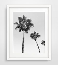 Black White Photography Palm Tree Decor Palm by MelindaWoodDesigns #blackandwhite