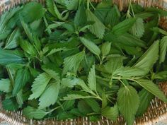 Nettle is not only a wonderful source of essential vitamins and minerals, but also provides powerful relief from allergies. Drinking nettle tea regularly will reduce your allergy symptoms. Herbs For Allergies, Allergy Relief, Allergy Symptoms, Vitamins And Minerals, Drinking, Medicine, Backyard, Tea, Health
