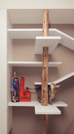 A cat's fantasy play land was built into the bookshelves offering the feline a scratching post and multilevel shelves and platforms to run a...