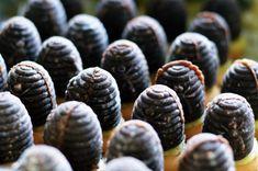 Vosí hnízda (včelí úly) - recept na rychlé a nepečené cukroví - Teeda Blueberry, Fruit, Food, Berry, Essen, Meals, Yemek, Blueberries, Eten