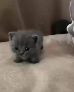 Cute Baby Cats, Cute Cat Gif, Cute Little Animals, Cute Cats And Kittens, Cute Funny Animals, Kittens Cutest, Cute Dogs, Baby Kitty, Pet Cats