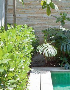 Clúsia: pode ser cultivada como arvoreta ou arbusto. É bastante utilizada como cerca-viva, em renques ou isolada. Tem capacidade de absorver gás carbônico durante a noite. Pode ser plantada em sol pleno ou meia sombra.