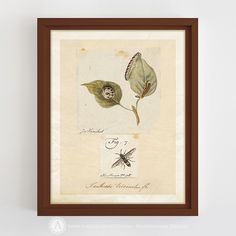 https://www.etsy.com/listing/494418948/antique-insect-illustration-insect-print?ref=listings_manager_grid #Printable #Insect #Print