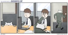 5 / 2014-02-25 / Fight and Flight business cat