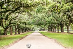 ANN BERTSCHIN PHOTOGRAPHY | BOONE HALL PLANTATION