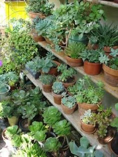 """Hummm Maybe this would be something that would be cute in the courtyard!?! SUCCULENTS """"They thrive on neglect!"""""""