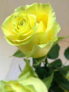 Gorgeous Yellow Rosé