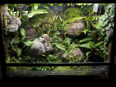 Fake rocks - vivarium for loads of Morning Gecko