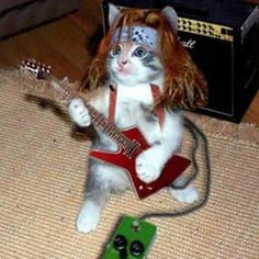 Let's rock! Cat's rock!