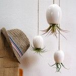 love these upside down hanging planters
