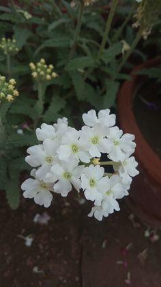 #White_flower_bouquet Latest Dpz, Bouquet, Flower, Plants, Bunch Of Flowers, Bouquets, Plant, Flowers, Planting