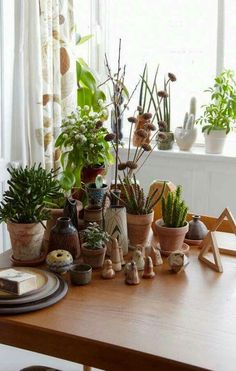 de | Pflanze, Summer und Sommer