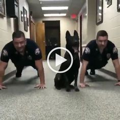 Push_UP with dog. The Smart Dog Trained By The Police - Animals & Pets, smart dogs, dog training, police uniforms, police offices Dog Quotes Funny, Funny Dogs, Cute Dogs, Funny Animal Videos, Funny Animals, Cute Animals, Animals Dog, Smart Animals, Military Dogs