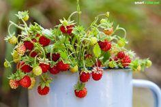 Dein Balkon ist klein, schattig oder gen Norden ausgerichtet? Kein Grund zu verzweifeln - mit diesen Tipps verwandelst du ihn in einen bunten Kräutergarten!