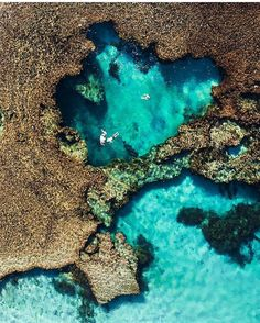 Wow wow wow! How beautiful is this shot by @airprints over #RottnestIsland in #WA  The ocean looks perfect here  Whose been or has Rottnest on their bucket list too? #thisisWA #westernoz #australia #rottnest #bliss #blues #aerial #goodvibes #bondivenus #wanderlust #seeaustralia by bondivenus http://ift.tt/1L5GqLp