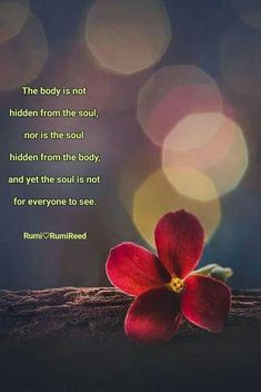 Rumi Love Quotes, Sufi Quotes, Spiritual Quotes, Wisdom Quotes, Positive Quotes, Inspirational Quotes, Buddhist Quotes, Affirmation Quotes, Powerful Quotes
