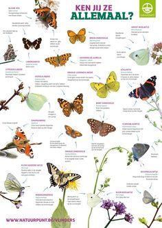 Mooi overzicht van de verschillende vlindersoorten