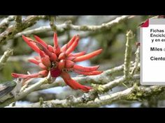 100 mil especies de plantas, animales y hongos de México en línea: explora la Enciclovida - Más de México