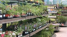 Garden centre - Farnham, Surrey - Garthowen Garden Centre - Garden plants