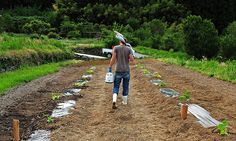 farming in Japan  #helpx #wwoof #workexchange #hapakuna