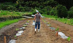 farming in Japan  #helpx #wwoof #workexchange #hapakuna