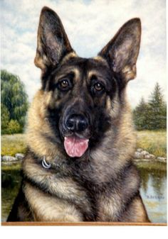 Cute German Sheppard Size: large Exercise: High Grooming: Medium Trainability: Easy
