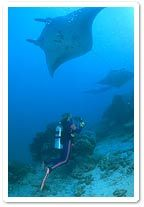 Yap, Micronesia...this is where I saw the giant Manta Rays for the first time.  A must do before one passes on.