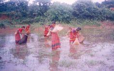 Hajong women fishing with 'Jakha' a traditional fishing implement - Hajong - Wikipedia, the free encyclopedia Slash And Burn, Northeast India, Women Fishing, Bodo, The Past, Traditional, Free